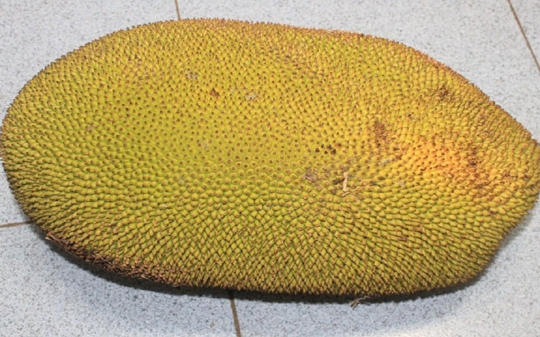 Food For Diabetics   Jackfruit Health Benefits The Diabetes Connection   Diabetes Diet