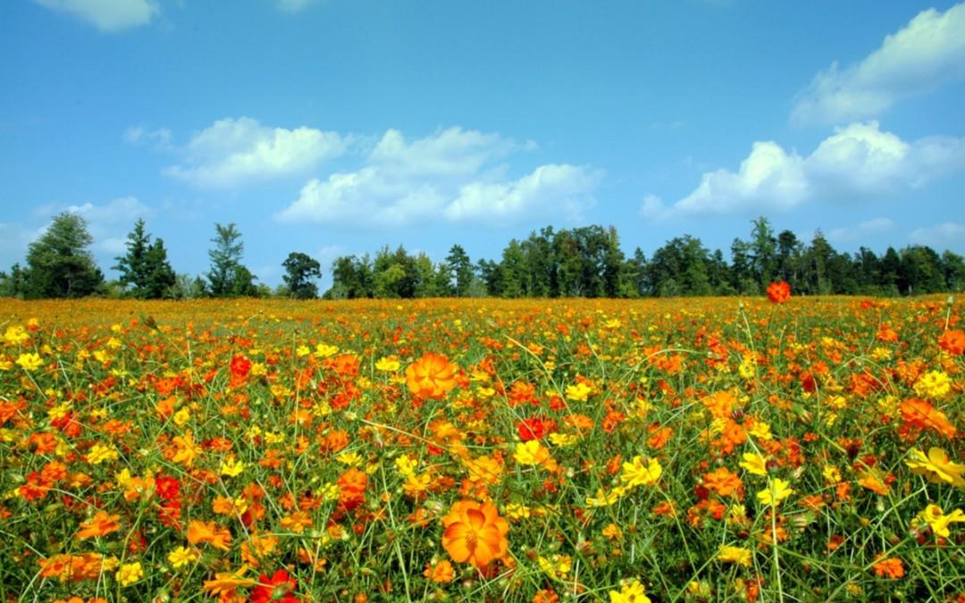Foods That Fight Seasonal Allergies