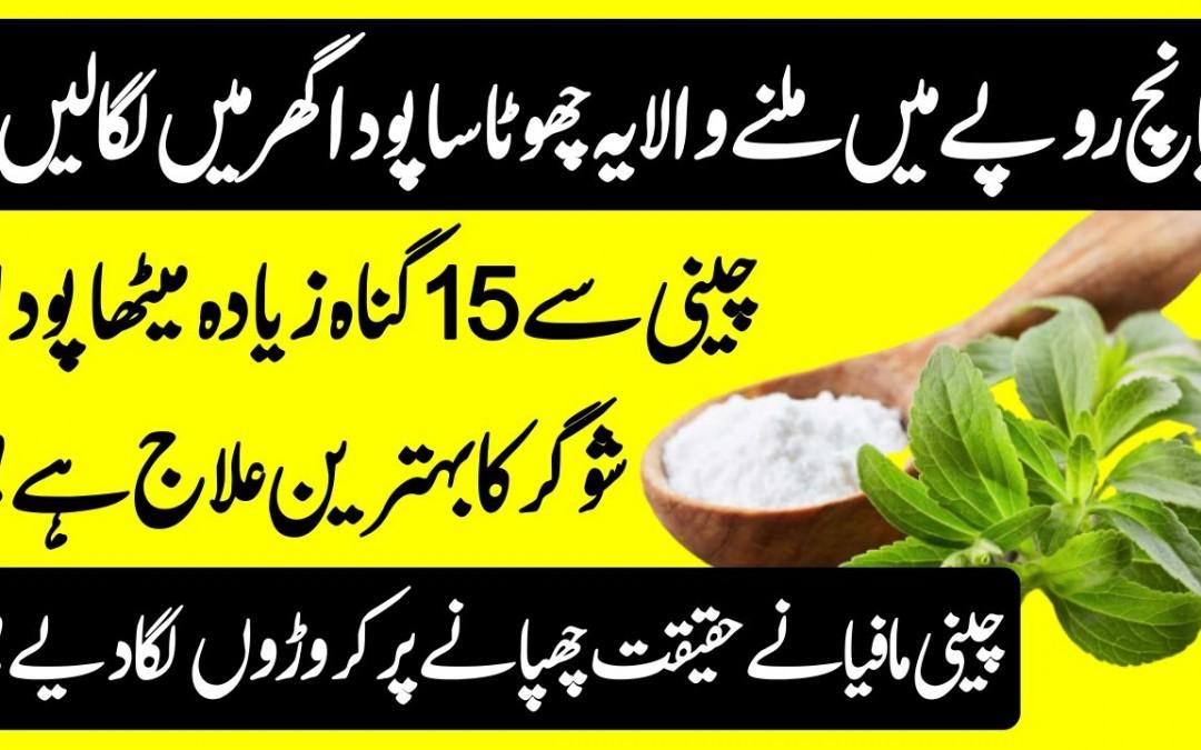 Stevia Plant Health Benefits For Diabetes Patients – How To Grow Stevia Plant Urdu Hindi    Urdu Lab