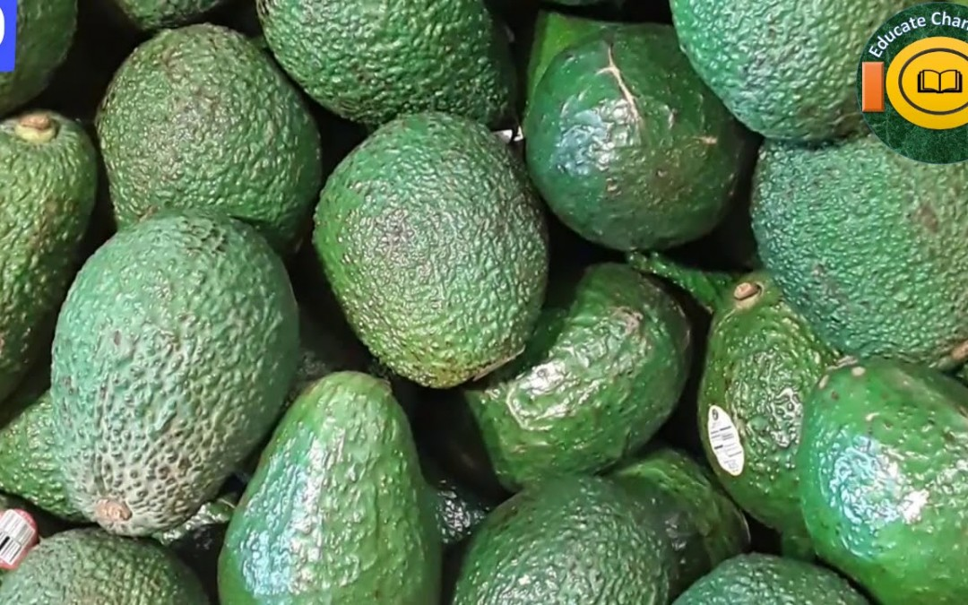 16 Health Benefits Of Avocado