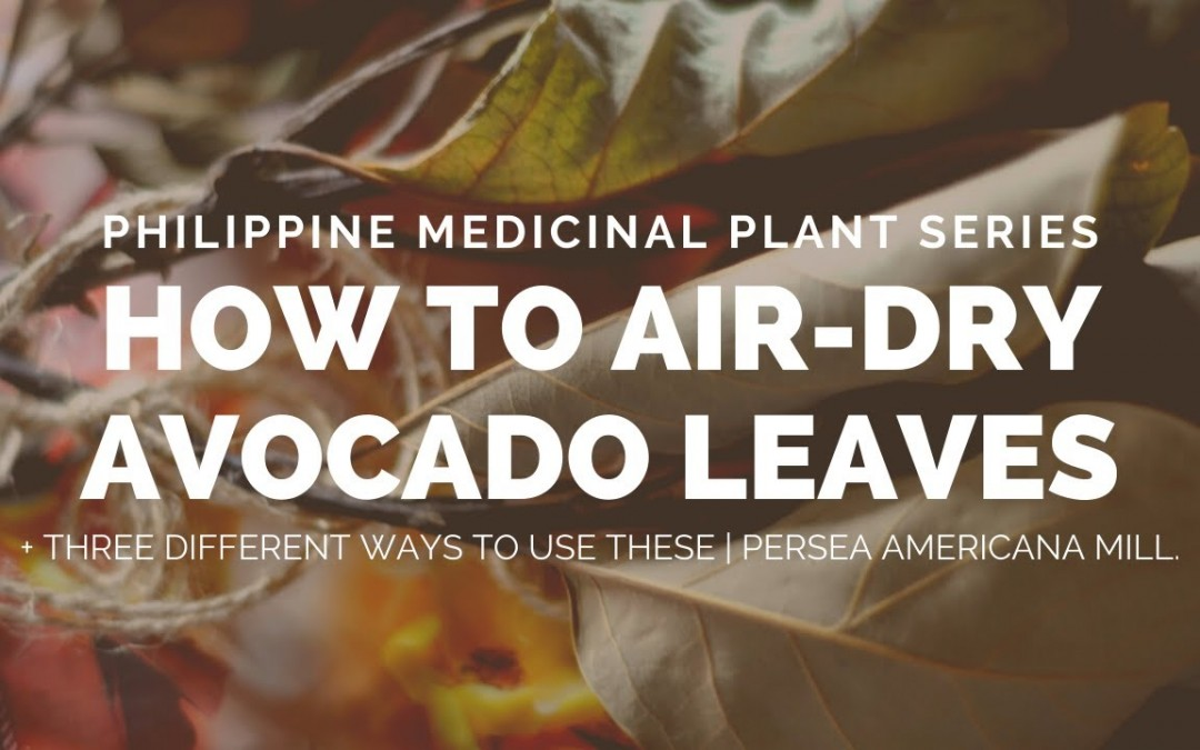 Epi. 77 | Air Drying Avocado Leaves for Tea and Other Uses