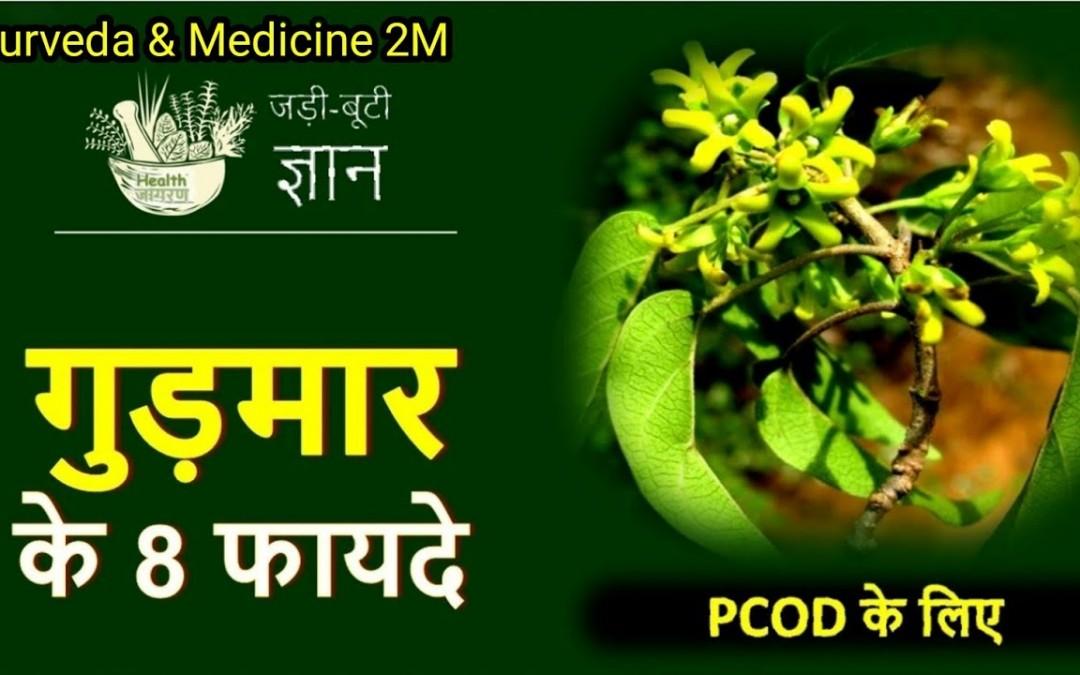 Gudmar ke fayde | gudmar ke fayde in hindi | Gudmar ka podha | Gudmar benefits | Ayurveda & Medicine