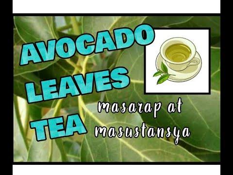 Nanay Mao : AVOCADO LEAVES TEA : SLIMMING AID?