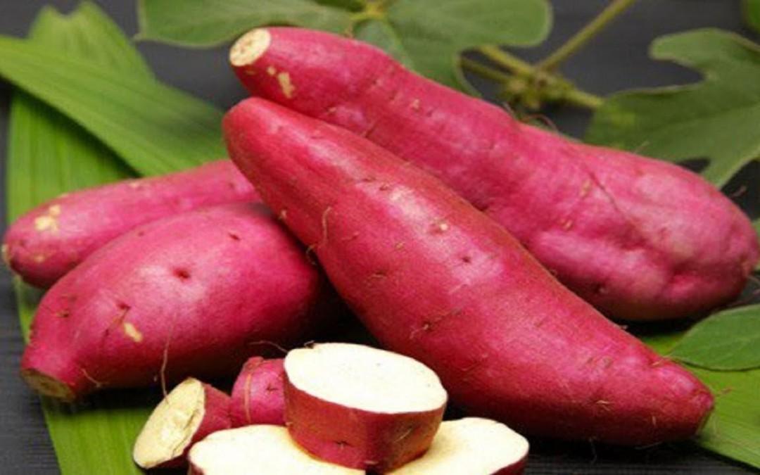 Are Sweet Potatoes Good for Diabetics  Sweet Potatoes and Diabetes