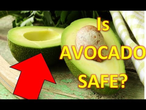 Why Avocado Good for You? Avocado Nutrition Fact and Benefits
