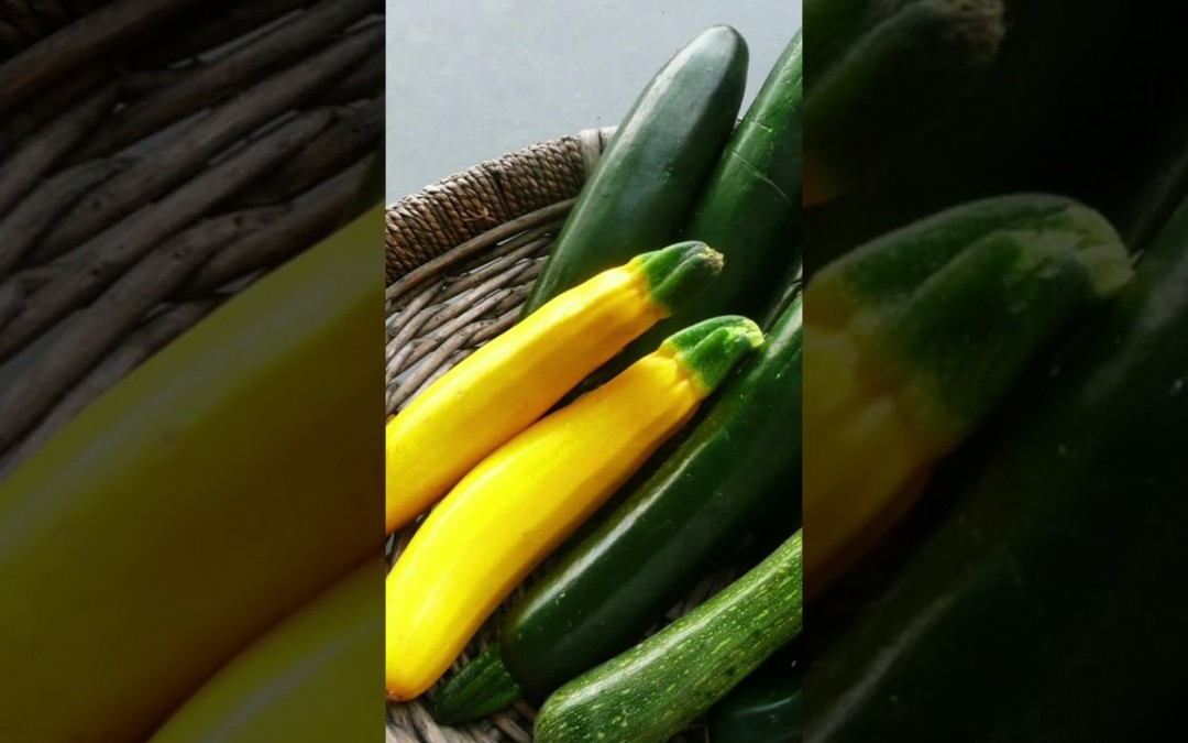 Top 10 health benefits of Zucchini | Top 10 health benefits of vegetables | Exotic Vegetable Facts