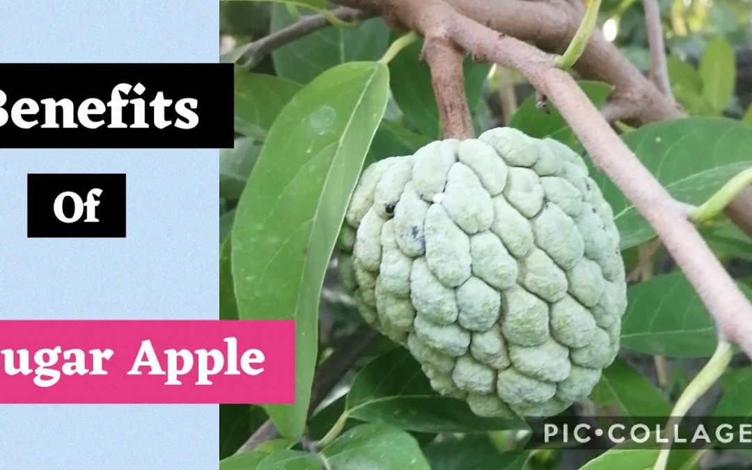 Atis/Sugar Apple Benefits